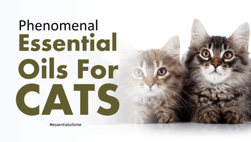 essential-oils-for-cats