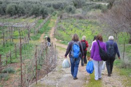 You can find wild edible plants all over Crete