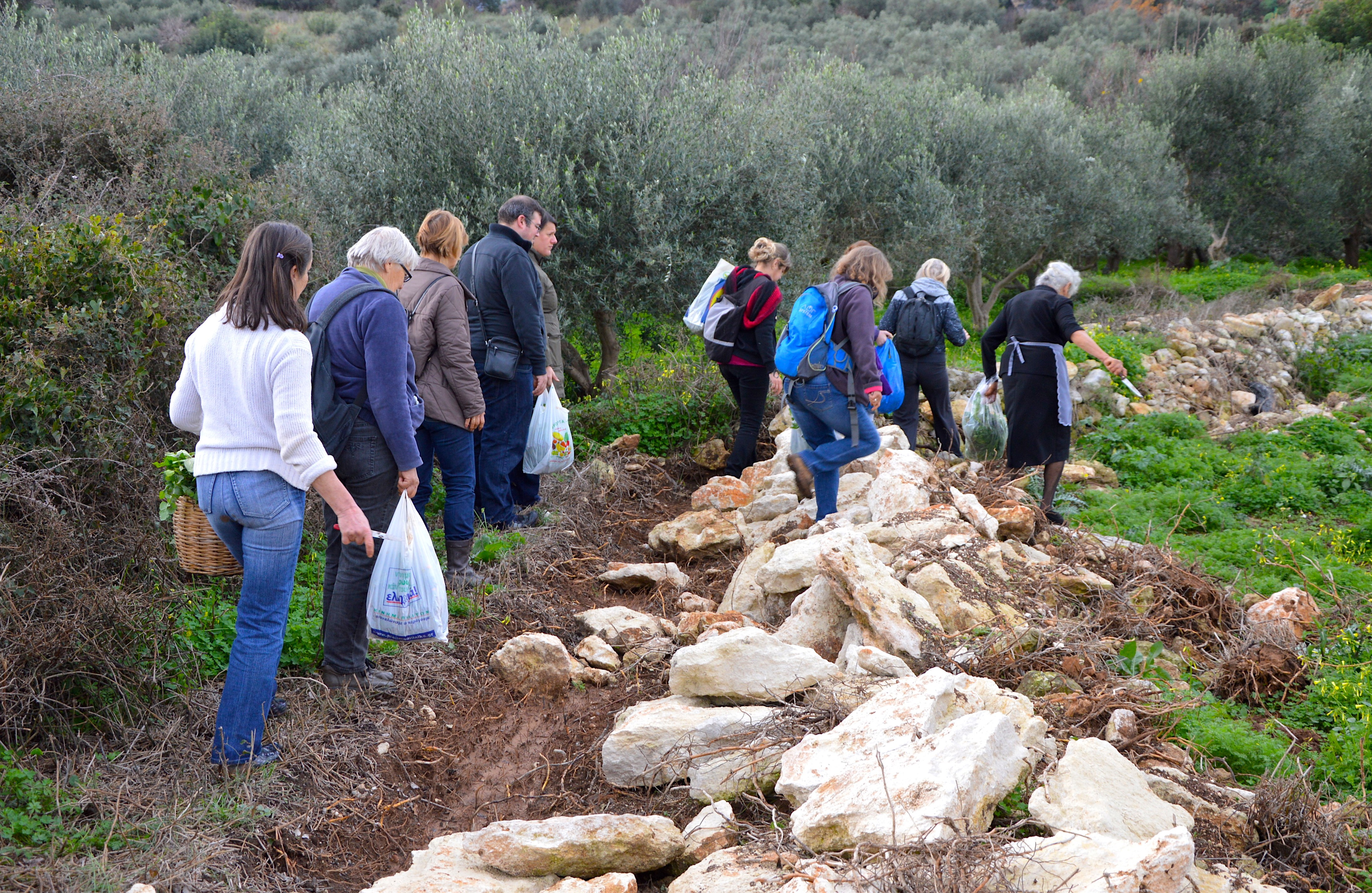 Let's learn finally the wild edible plants of Crete! - Part 2