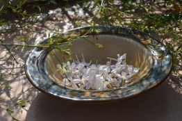 Jasmine flowers to make an infusion