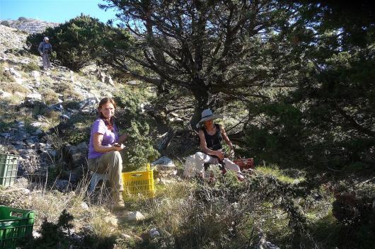 Ildiko encompassed by Babis Psaroudakis, Janina Sorensen and the subtle energies of the cypress trees