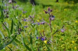 Angustifolia of The Lavender Way