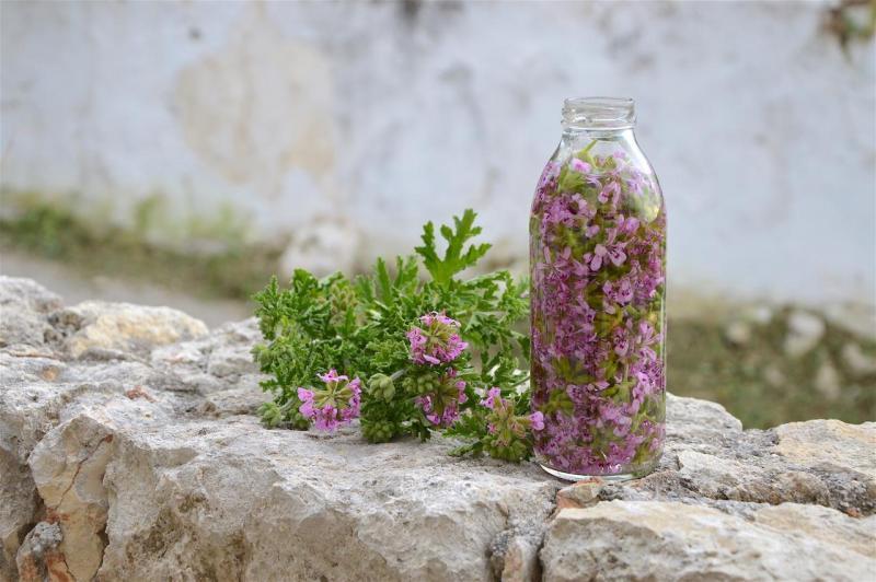 Rose geranium flowers for tincture making