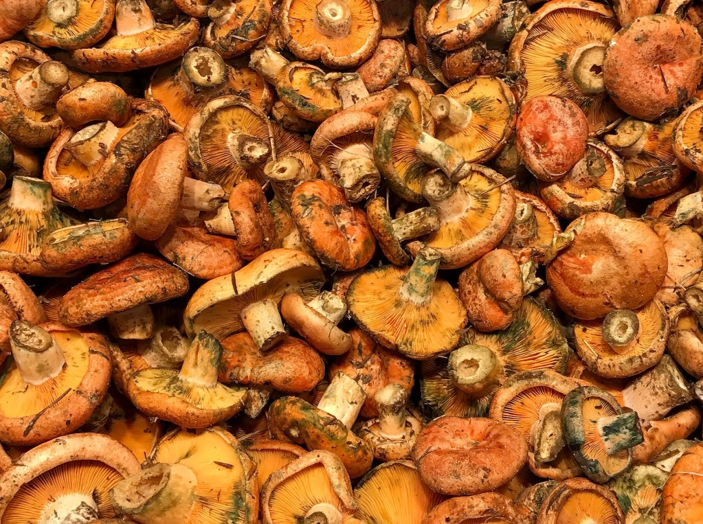 A Catalan Obsession with Fungus