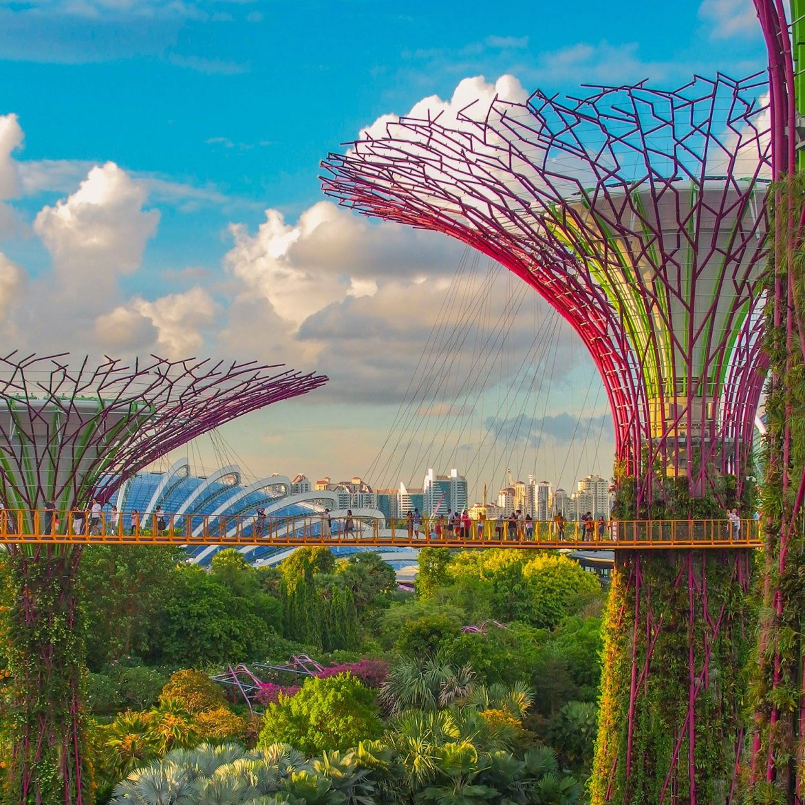Super Tree Grove at Gardens by the Bay - photo: Coleen Rivas