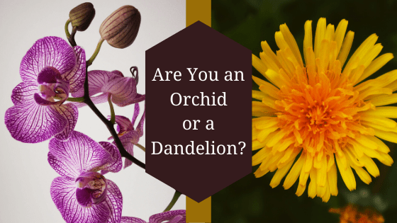 """When It Comes to Speaking, Are You an """"Orchid"""" or a """"Dandelion?"""""""