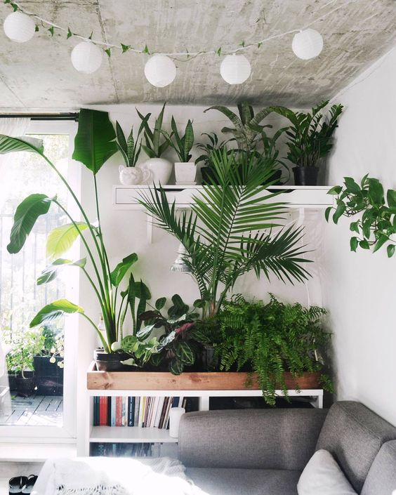 Using Filler In Fluff In Home Decor Making Arrangements: Home Decorating With Plants