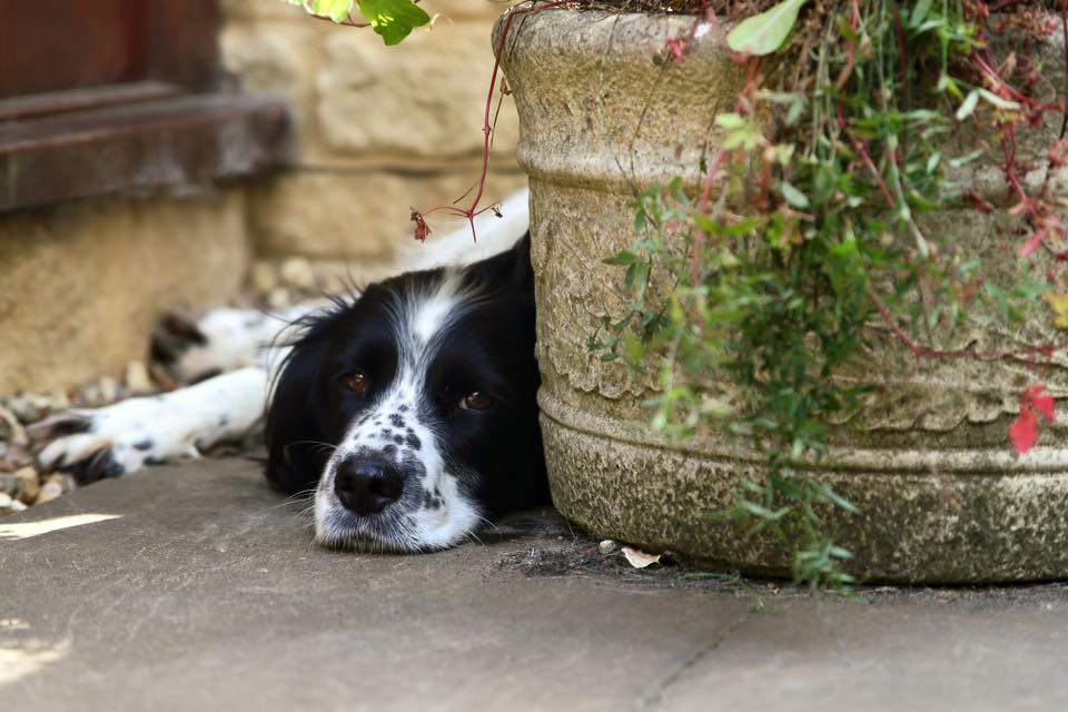 Dog relaxing by a plant pot