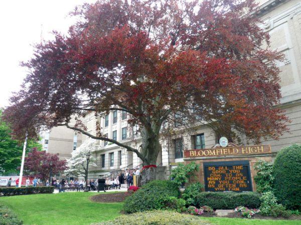 A school praises a tree as it passes into the future