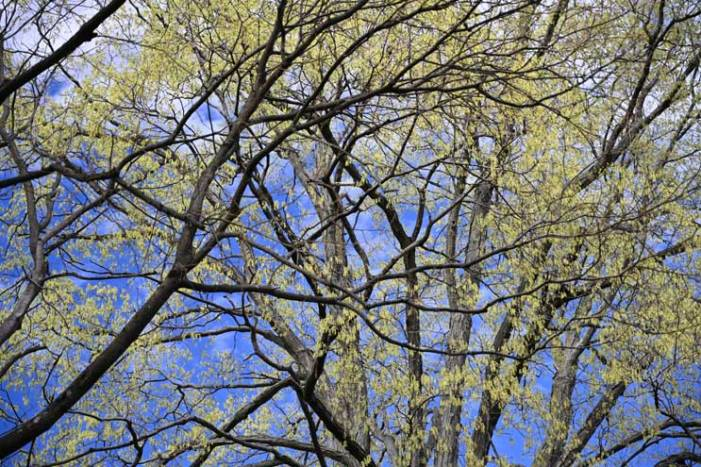 Celebrate Arbor Day as grant brings 64 new trees to South Orange