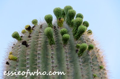 april 17 2017 desert photo (8)