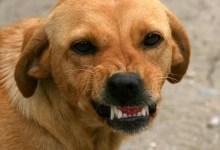 Photo of Santa Lucía: menor de 12 años fue atacada por un perro