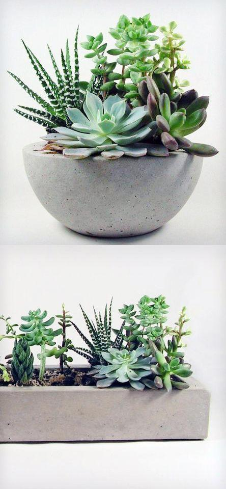 How to Grow an Easy Succulent Garden | 31Daily.com