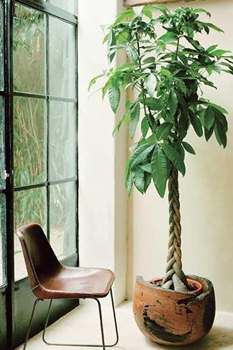 Decorar con plantas_castaña de agua 1