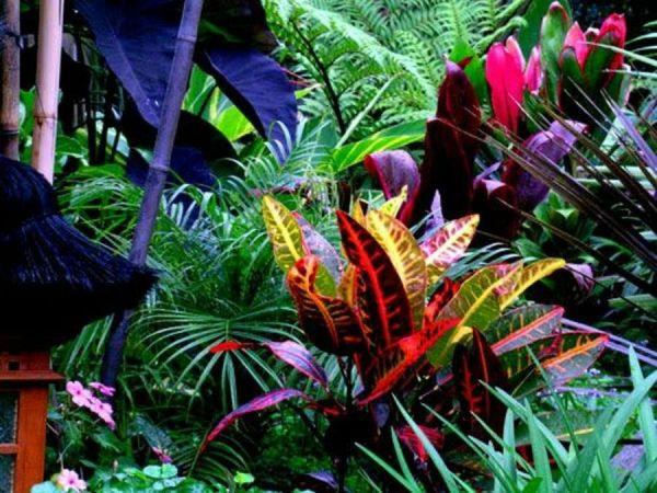 maravillas tropicales plantas
