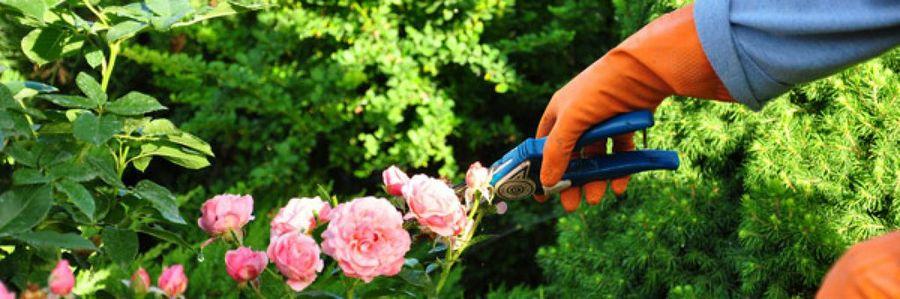 Resultado de imagen para rosales