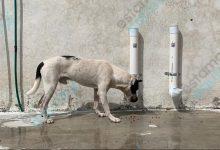 Foto de Instalan dispensadores de agua y comida para animalitos en situación de calle