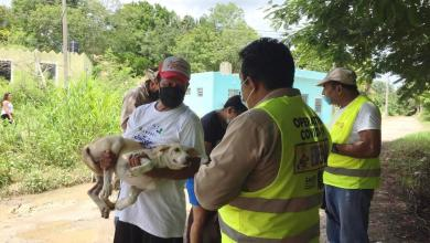 Foto de Anuncian Semana de Vacunación Antirrábica Canina y Felina 2020