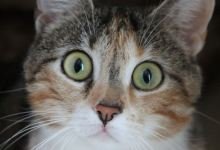 Foto de Gato asombrado conquista las redes