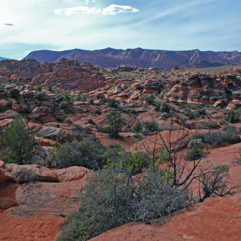 Snow Canyon State Park Petroglyphs