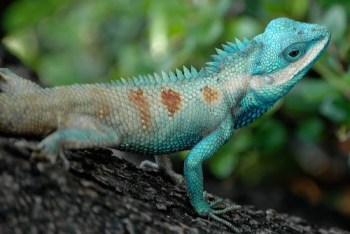 reptile theory litigation
