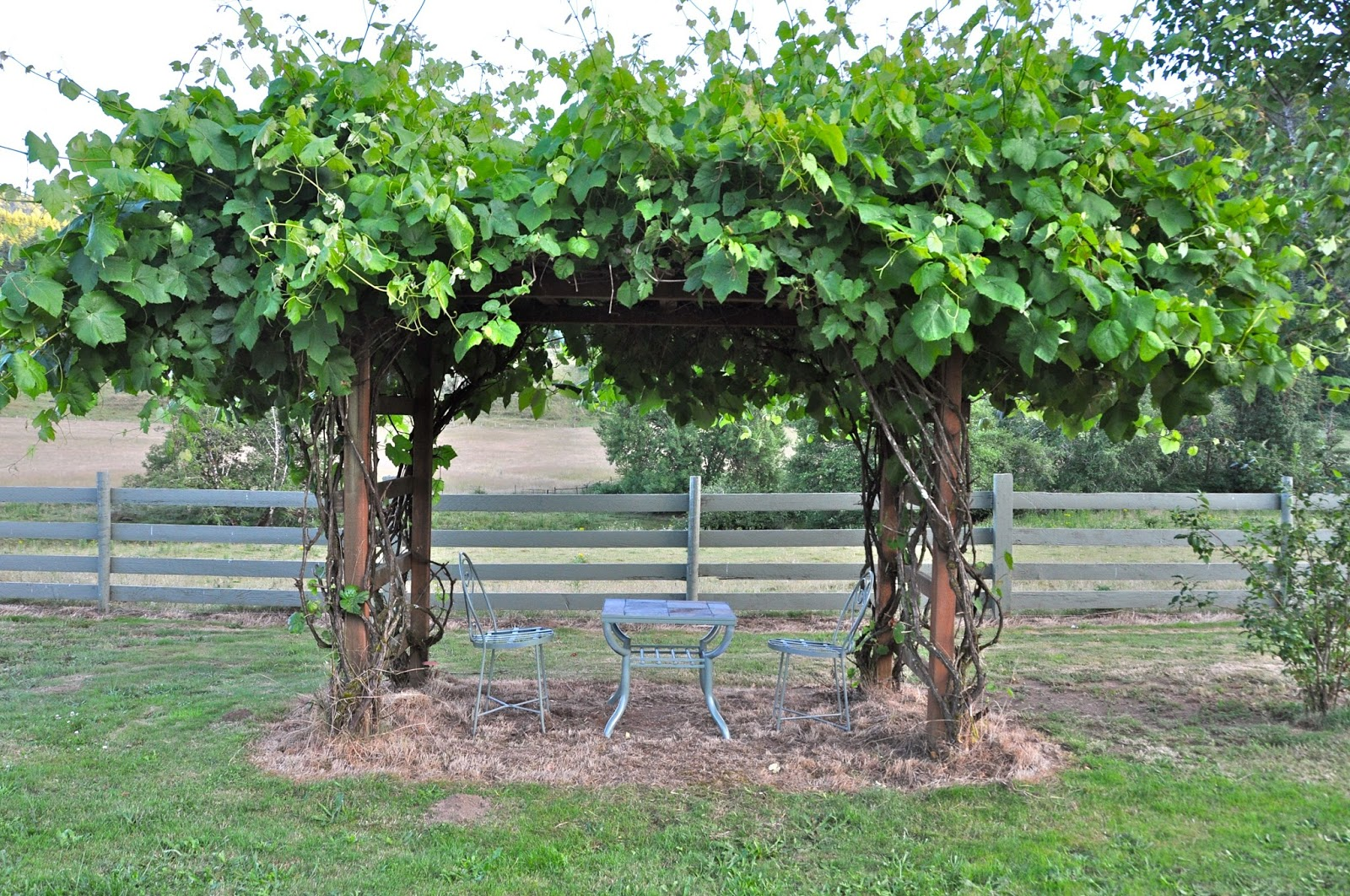 grape arbor design