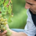 Understanding Italian Wines