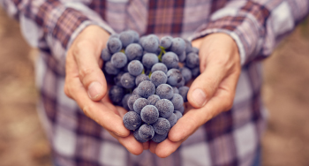 Man holding bunch of grapes