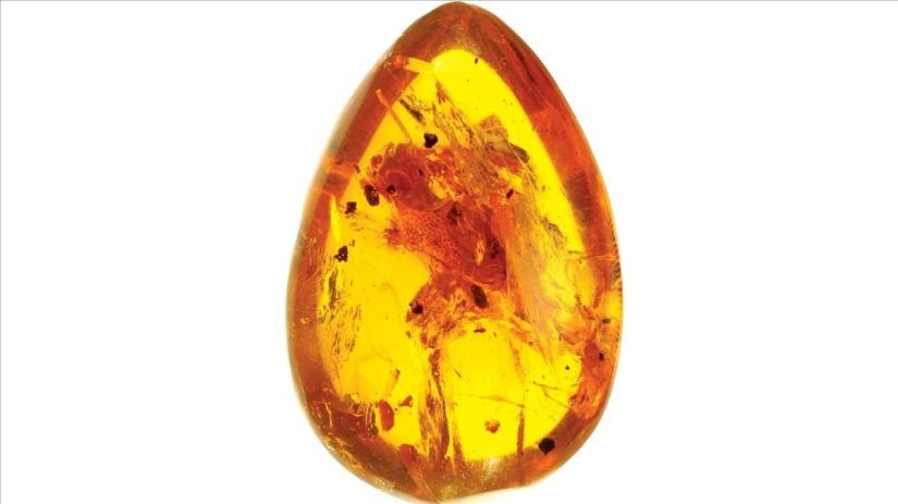 A drop of amber protects a rare amphibian for 100 million years