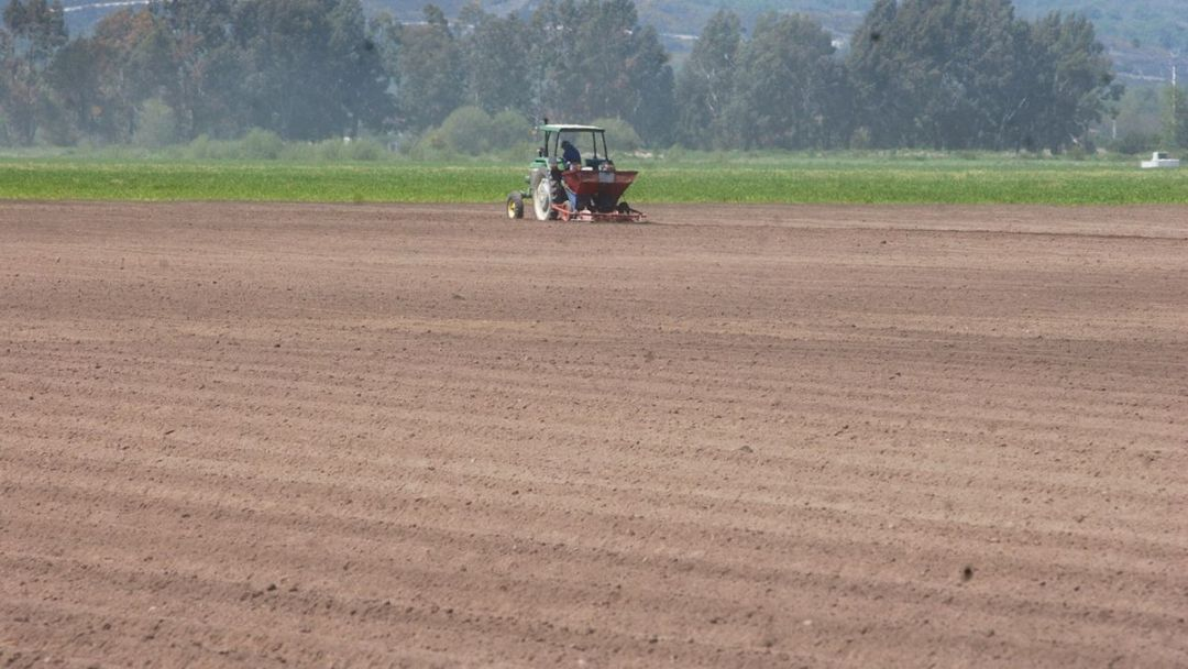 Campo de cultivo de patata en Xinzo de Limia