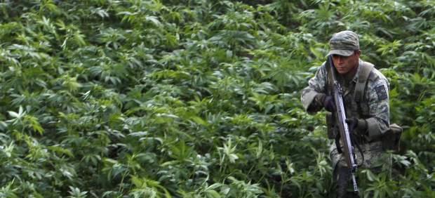 Plantación de marihuana en México