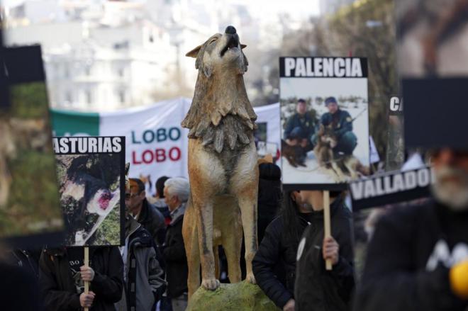El lobo, motor del cambio | Ciencia | EL MUNDO