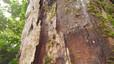 Dipterocarpus lamellatus. Árbol de hoja perenne de la selva lluviosa de Borneo, concretamente único de la reserva forestal Siangau, en Sabah (Malasia). Amenazado por las talas y las plantaciones industriales. Población estimada: solo se tiene constancia 12 ejemplares.