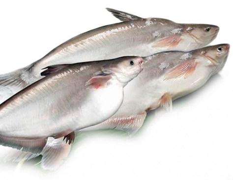 ¿Qué es el panga? ¿Es peligroso su consumo? 5 claves sobre un pescado en el punto de mira