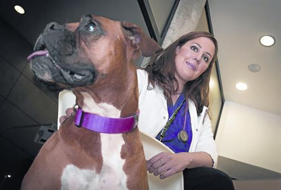 """Núria Querol: """"El perro también es víctima de la violencia machista"""""""