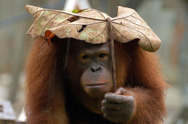 animales-y-sus-paraguas-naturales-5