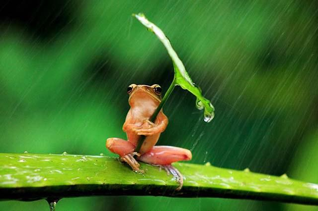 animales-y-sus-paraguas-naturales-10