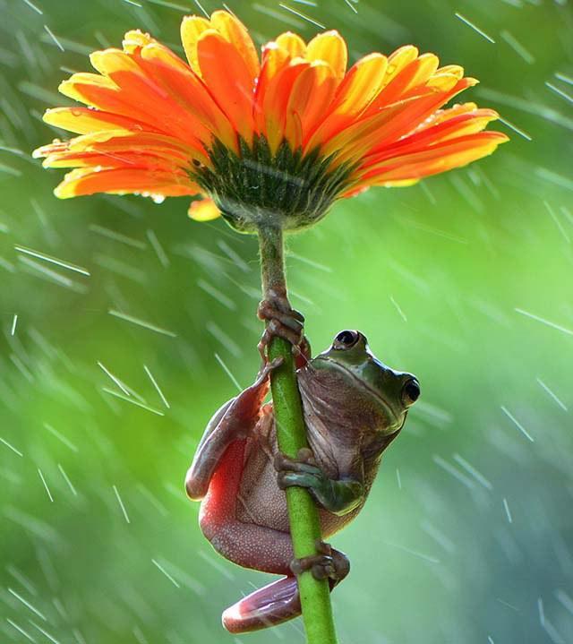 animales-y-sus-paraguas-naturales-13
