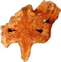 Fragmento del cráneo fosilizado del cocodrilo. | PLoS ONE