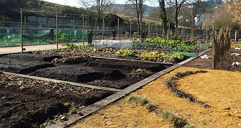 Un huerto abierto al público, en Ourense.