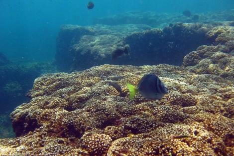 Un arrecife de coral en Panamá.   Science