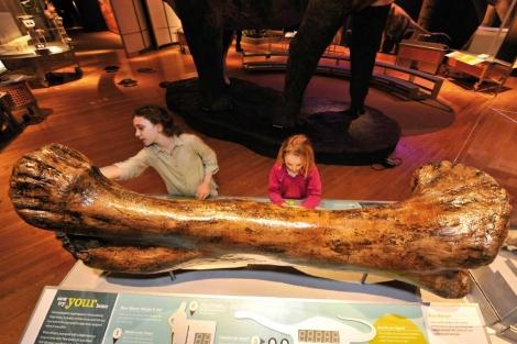 Fémur de saurópodo. | Museo de Historia Natural de París Vea más fotos aquí)