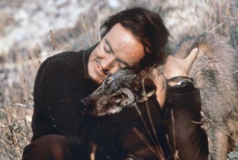 Félix Rodríguez de la Fuente con un lobo ibérico. | FRF