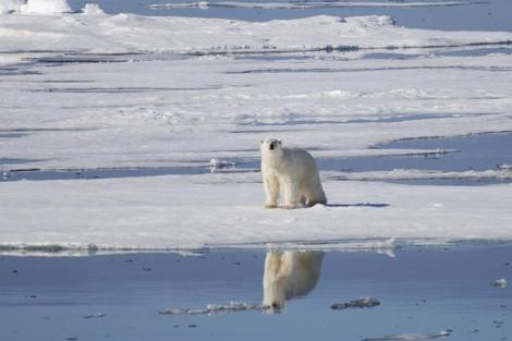 Un oso polar afectado por el deshielo en el Ártico. | Geir Wing Gabrielsen