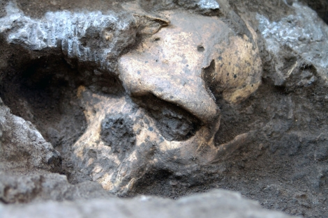 El fósil del cráneo fue desenterrado en 2005 en Dmanisi, Georgia.| Museo Nacional de Georgia.