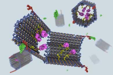 El nano-robot fabricado a partir de ADN. | C. Strong/S. Douglas/G. McGill