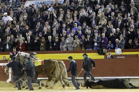 El toro de Miura, aplaudido en el arrastre. | Eugenio Torres