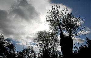 La 'vidente' Amparo Cuevas afirma que la Virgen se le apareción en un árbol de Prado Alto (a la dcha.). (J. Ayma)