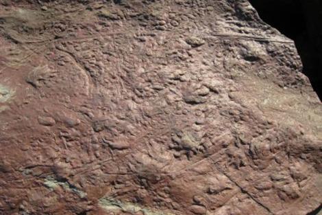 Huellas fosilizadas de reptil. | University of London/Bristol