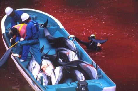 Pescadores japoneses durante una de las matanzas. | APF